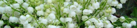 cropped-blooms-white-on-grn.jpg
