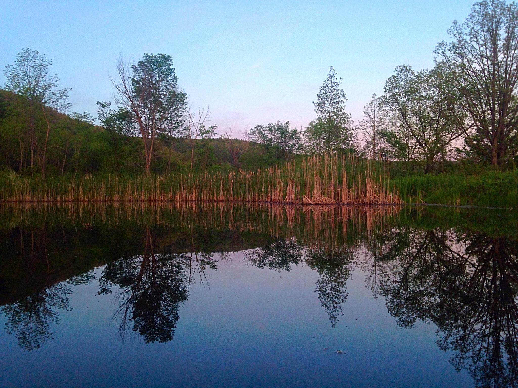 pond in spring copy