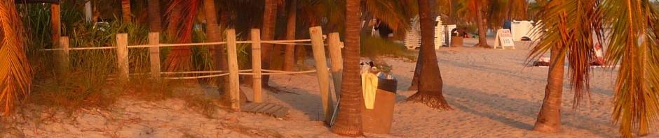 cropped-palm-tree.jpg